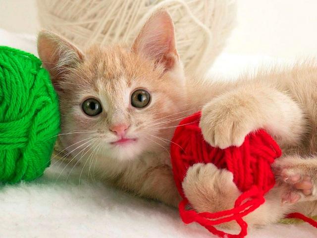 Полезные ссылки для рукодельниц 47110263_1249381739_wallpapers_cats_445