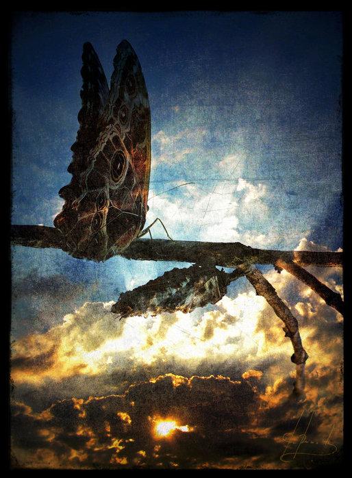 Bienvenidos al nuevo foro de apoyo a Noe #200 / 10.12.14 ~ 12.12.14 - Página 37 36532678_When_My_Sun_Comes_Down____by_IrondoomDesign