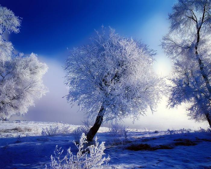Zimska idila - Page 2 36847887_1