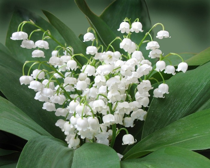 Красив цветок пока не сорван.... - Страница 2 39856766_0_1616_c401c1bf_XL