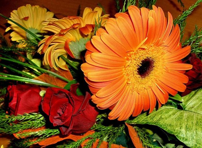 Lule dhe vetëm lule! 50037755_313