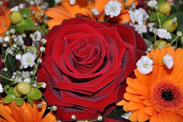 Lule dhe vetëm lule! 50037771_304