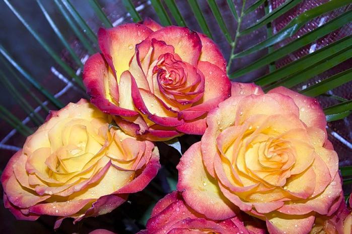 Lule dhe vetëm lule! 50037899_225