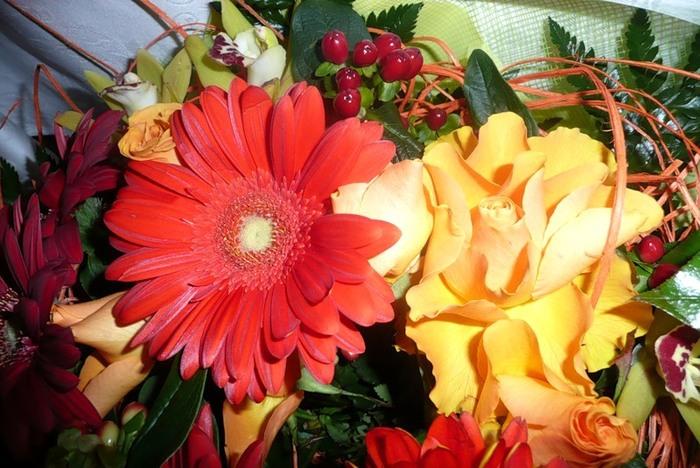 Lule dhe vetëm lule! 50037930_226