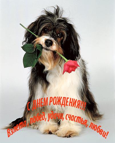Экспромт поздравление -  54985074_50558921_Dog