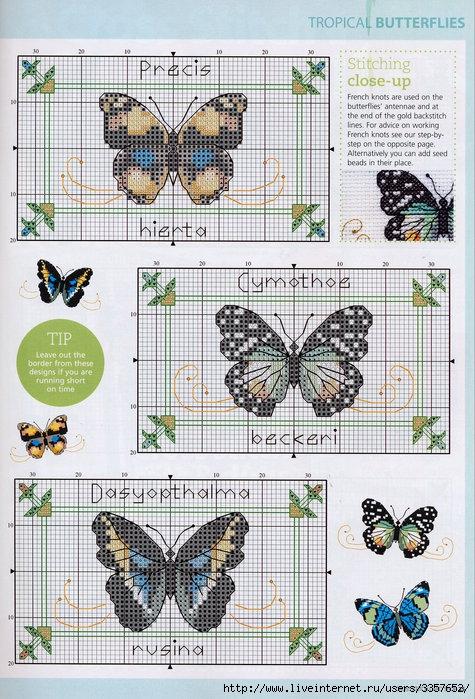 Много..... 56025354_Spread_your_Wings__Tropical_Butterflies_Pattern_Pg_2