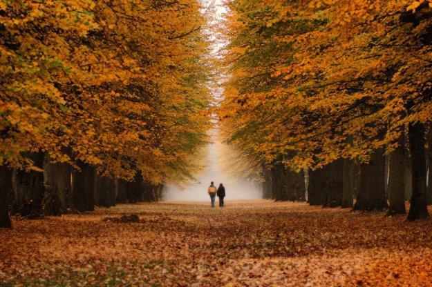 Отцвели цветы, падают листья, птицы молчат, лес пустеет и затихает.ОСЕНЬ. 116150487_168363_324090