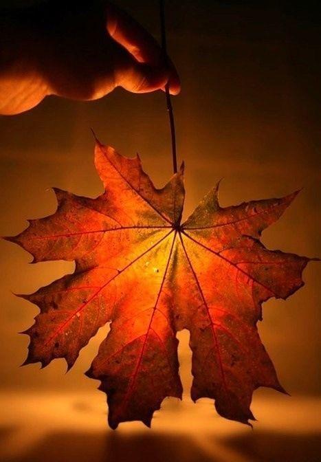 Empieza el otoño. 116702383_large_4216969_c9091c08736b7c7c15e6e60725f8bd24