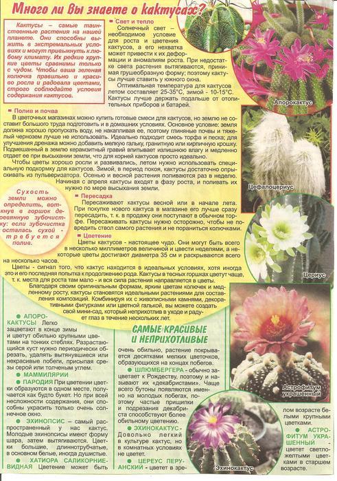 Кактусы и суккуленты 68489098_Izobrazhenie_028