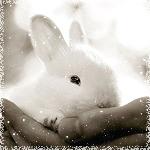 Аватары с животными - Страница 3 68668890_d84fe2f733f5f992