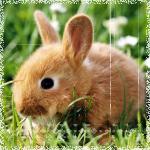 Аватары с животными - Страница 3 68669051_The_rabbit_
