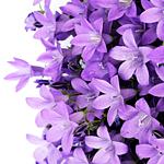 Аватары с цветами - Страница 6 72869506_1301579198_Avatar_288
