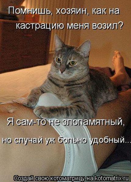 Котоматрица 73409779_3105276_kotomatrix_18