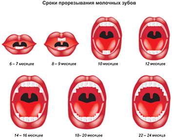 Продолжительность прозезывания зубиков 75420983_zubuy
