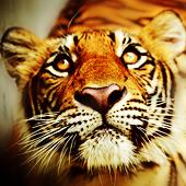 Аватары с животными - Страница 3 76122051_3749748_2812964