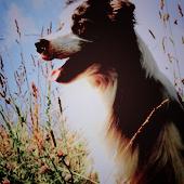 Аватары с животными - Страница 3 76036581_3749748_1811331