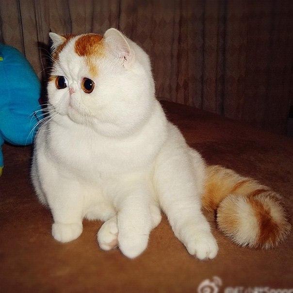 Самый милый кот на свете 87706501_large_snuppi