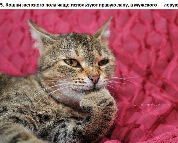 Котоматрица - 4 - Страница 2 123947039_5