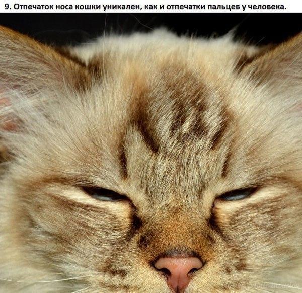 Котоматрица - 4 - Страница 2 123947043_9