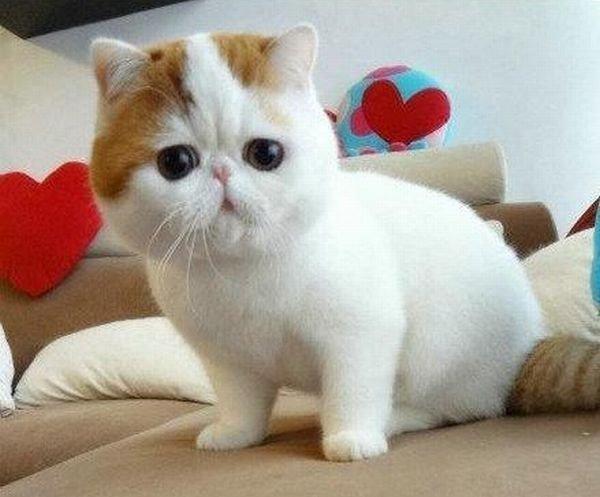 Самый милый кот на свете 86188995_1