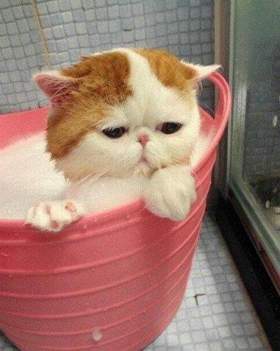 Самый милый кот на свете 86189021_3