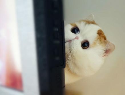 Самый милый кот на свете 86564909_snoopy