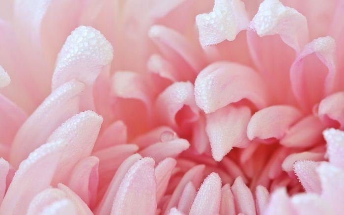 Цветы 87804373_large_2835299_111