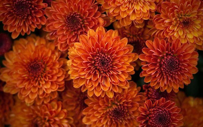 Цветы 87804383_large_2835299_orangeflower018_willmontague_nc_display