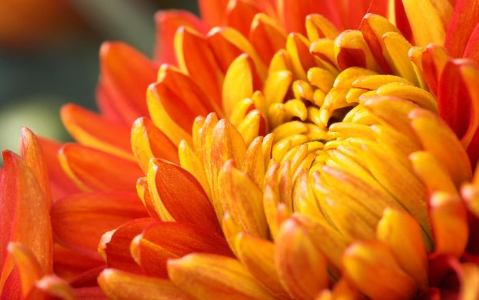 Цветы 87804385_large_2835299_orangeflower021_shenghunglin_ncnd_display