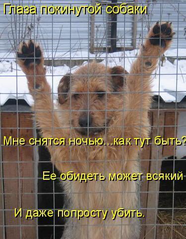 Стихи о собаках. - Страница 3 91733405_1105084_374889