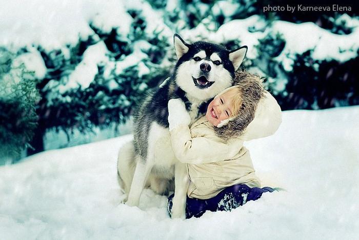 Все самые красивые собаки Мира 92091597_5i