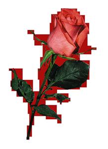 Bienvenidos al nuevo foro de apoyo a Noe #324 / 03.07.16 ~ 19.07.16 - Página 4 95823621_0_4dd06_e809f118_M
