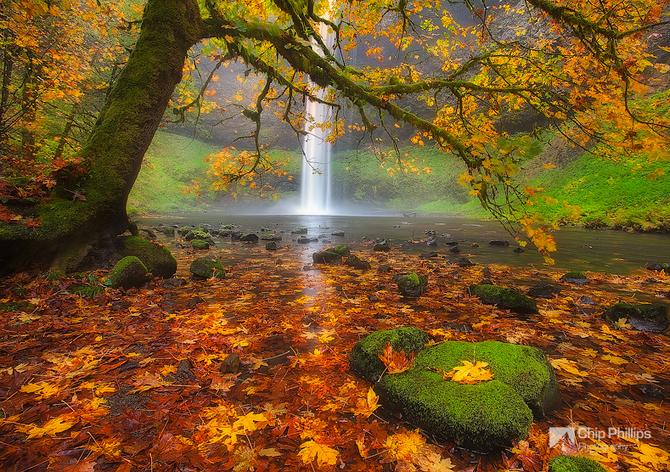 Красивые фотографии 96002781_large_505555