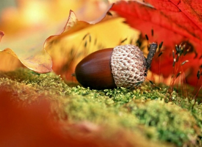 ... Y caen las hojas, llega ....¡¡¡ EL Otoño !!! - Página 4 105661949_1