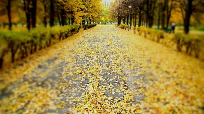 ... Y caen las hojas, llega ....¡¡¡ EL Otoño !!! - Página 8 107258139_4059776_0_9d3b7_bcadcbe7_XL
