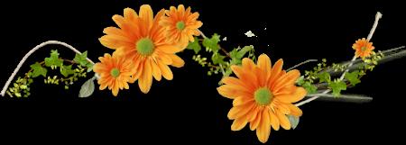 """Галерея выпускников школы """"От горшка два вершка""""  Герберы """"Поцелуй солнца"""" 137669769_3415"""