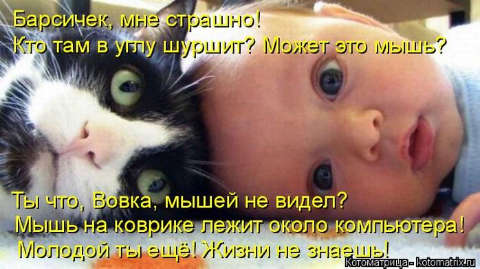 kotomatritsa_n (1) (700x392, 400Kb)