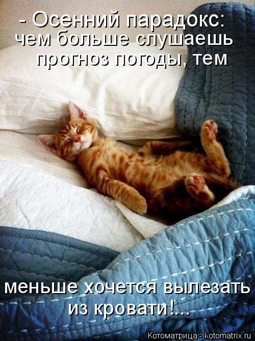 kotomatritsa_Z7 (500x669, 437Kb)