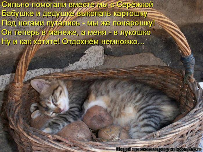 Котоматрица  - Страница 39 138224913_4