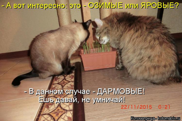 Котоматрица  - Страница 39 138224923_14