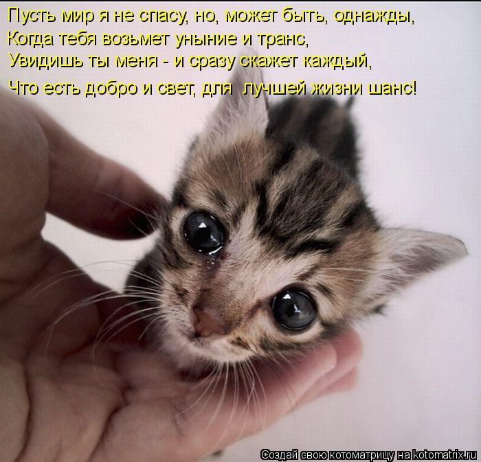 Котоматрица  - Страница 39 138224929_20