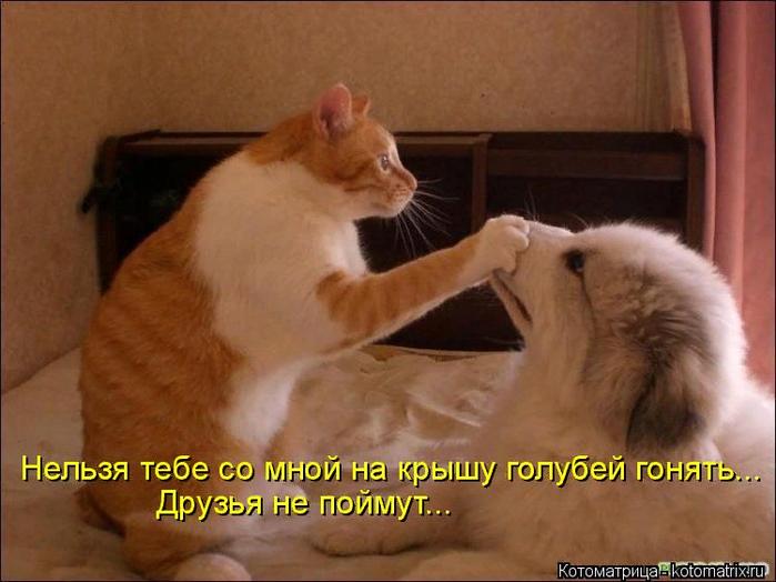 kotomatritsa_p (700x524, 406Kb)