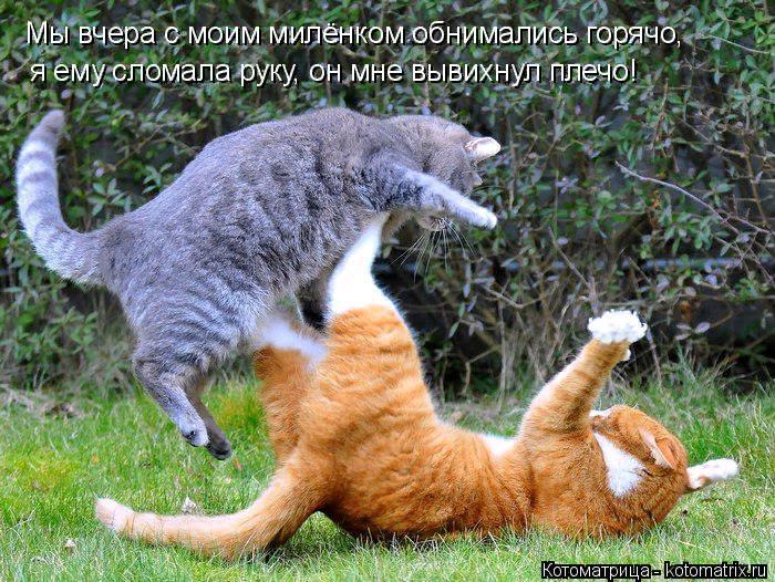 kotomatritsa_t (1) (700x526, 583Kb)