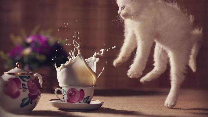 kitty-cat-cute-surprise-5282 (700x393, 50Kb)