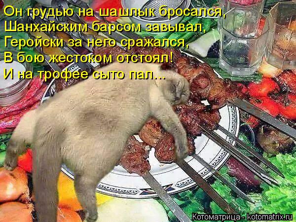 kotomatritsa_KS (600x450, 322Kb)