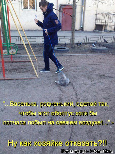 kotomatritsa_1d (453x604, 273Kb)