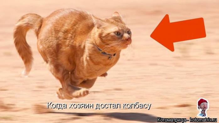 kotomatritsa_BM (700x392, 216Kb)