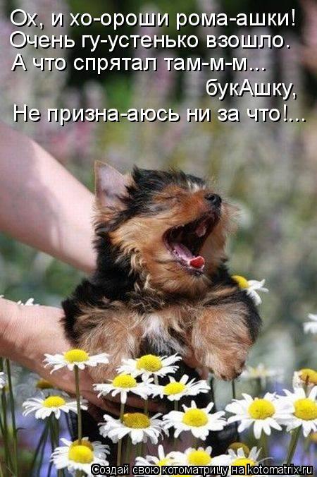 kotomatritsa__ (450x676, 255Kb)