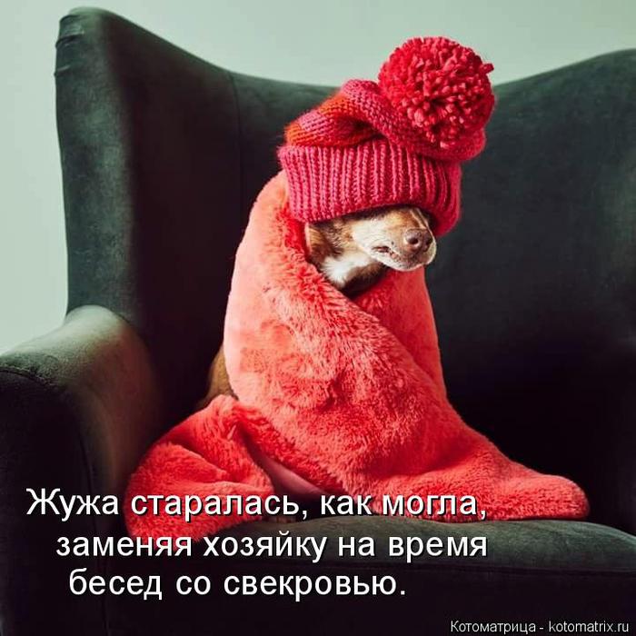 kotomatritsa_1 (700x700, 366Kb)