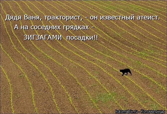 kotomatritsa_2 (1) (700x480, 383Kb)